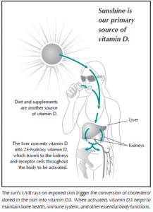 Diagram of how the body converts sunshine into Vitamin D