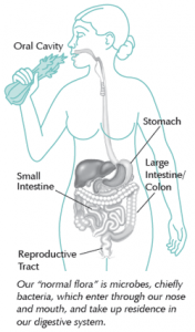 Diagram of the digestive system