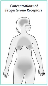Diagram showing concentrations of progesterone receptors