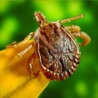 lyme disease research